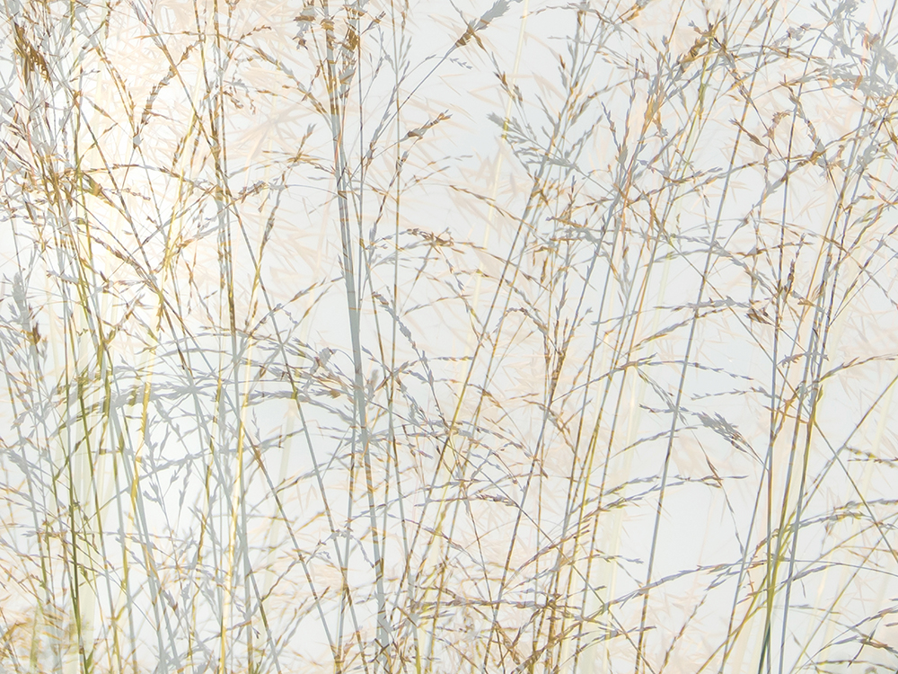 As Grasses Gently Sway V FW