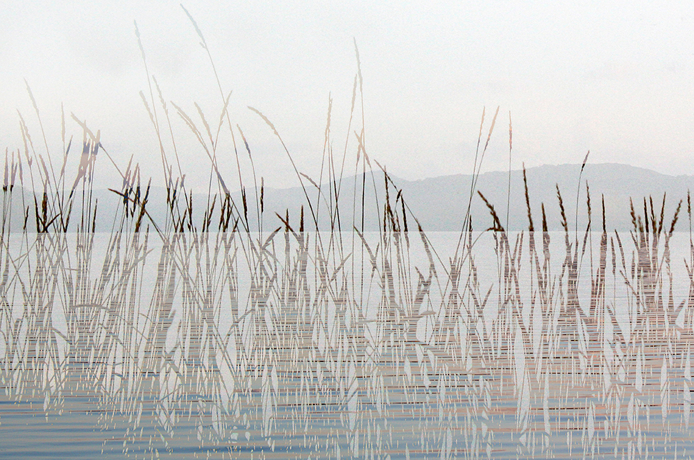 Through the reeds IV